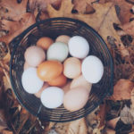 Kilcatten Lodge's own free range eggs